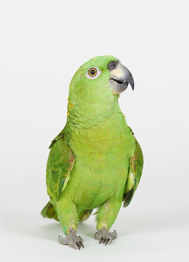Produkter til fugle